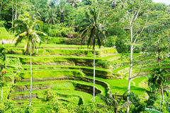 Bali Royalty Free Stock Images