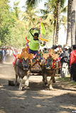 Bali Traditional Cow Race. The traditional buffalo racing events Bali - Indonesia, Routine held every year in Jembrana District, Bali Royalty Free Stock Photography