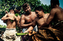 Bali Traditional Pandanus War. Bali Pandanus War is traditional culture from karangasem. Bali Local people used to call Mekaré-kare royalty free stock photos