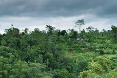 Bali tropiskt skoglandskap Ubud royaltyfria bilder