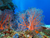 Bali undersea scenery Stock Images