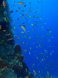 Bali undersea scenery Royalty Free Stock Image