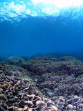 Bali undersea scenery Royalty Free Stock Images