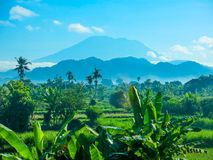 Bali volcano. Beautiful landscape of Bali looking at Mount Agung, Indonesia, active volcano Stock Image