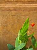 Bali wall Stock Photos