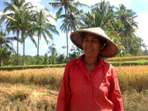 Bali woman on rice terrace. Bali woman smile on rice field and palms. Catching harvest Royalty Free Stock Images