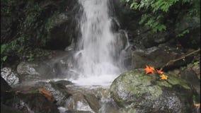 Balian stream in Taiwan stock video footage