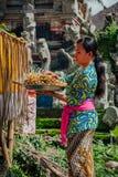 Balijczyk kobieta robi ofiarom w świątyni, Ubud, Bali Obrazy Stock