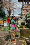 Balijczyk kobieta robi ofiarom w świątyni, Ubud, Bali Zdjęcia Stock