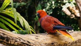 Balijczyka kakadu zdjęcie royalty free