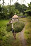 Balijczyka rolnik Niesie traw rozcięcia dla zwierząt gospodarskich Fotografia Stock
