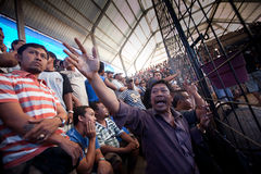Balijczyka tradycyjny cockfighting Zdjęcie Royalty Free