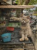 Balikpapan, Kalimantan/Indonesia, July 2017: Lonely cat on an Asian market. Balikpapan, Kalimantan/Indonesia, July 2017: Lonely cat in the cage on an Asian Royalty Free Stock Photography