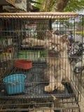 Balikpapan Kalimantan/Indonesien, Juli 2017: Ensam katt på en asiatisk marknad royaltyfri fotografi
