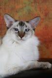 Balinees Blauw Punt Royalty-vrije Stock Afbeelding