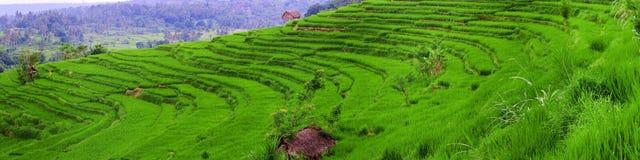 Balinese Stock Photo