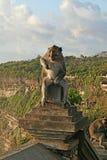 Balinese-Affe Lizenzfreies Stockbild