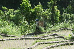Balinese agriculture Stock Images