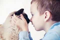 Balinese da criança do gato junto para jogar companheiro do amigo imagens de stock