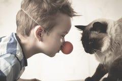 Balinese da criança do gato junto para jogar doméstico imagens de stock