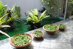 Balinese decor plants Stock Photography