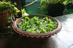 Balinese decor plants. Pot with floating plants in Balinese arcitectural style Royalty Free Stock Images