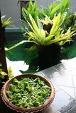 Balinese decor plants. Pot with floating plants in Balinese arcitectural style Stock Photography