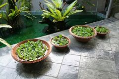 Balinese decor plants Stock Image