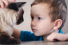 Balinese del bambino del gatto insieme giocare amico fotografia stock