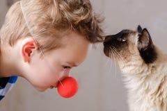 Balinese del niño del gato junto jugar pet fotografía de archivo libre de regalías
