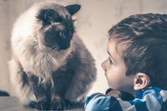 Balinese del ni?o del gato junto jugar compañero del afecto imagenes de archivo