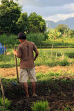 Balinese farmer with sickle Stock Images