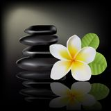 Balinese flower frangipani Royalty Free Stock Photos
