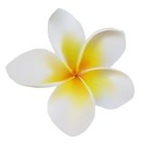 Balinese flower frangipani Royalty Free Stock Photography
