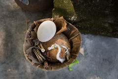 Balinese hindu offering. To the gods with  a cconut and an egg Stock Photography