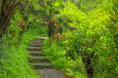 Balinese jungle. Green tropical jungle pathway on Bali, Indonesia Royalty Free Stock Image