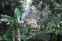 Balinese jungle Royalty Free Stock Image