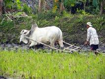 Balinese Landbouwer Royalty-vrije Stock Afbeeldingen