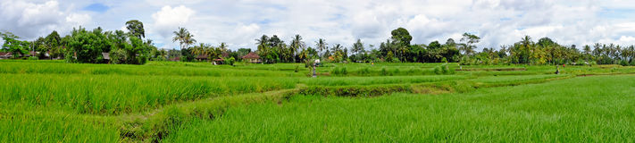 Balinese landscape with rice fields in Indonesia Stock Image