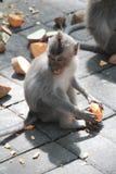 Balinese-langschwänziger Affe Macaca Fascicularis Lizenzfreie Stockfotografie