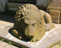 Balinese Lion. A lion guards a temple in Bali Royalty Free Stock Image