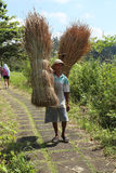 Balinese man carrying reeds Stock Photo