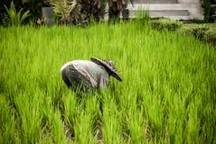 Balinese mensen in strohoed die aan terrasgebied werken royalty-vrije stock foto