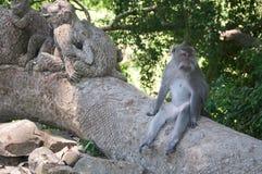 Balinese Monkey Sitting In Sacred Forest, Ubud, Bali, Indonesia.
