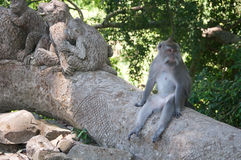 Balinese monkey sitting in sacred forest, Ubud, Bali, Indonesia. Stock Photo