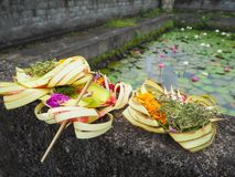 Balinese offerings at a pond with lilies Stock Images
