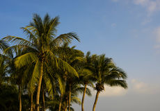 Balinese palms Stock Photo