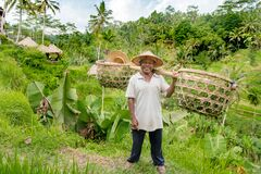 Balinese rice farmer coming from the rice field with double basket on his shoulder and typical straw hat on his head. Ubud, Bali