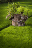 Balinese Rice Field Hut Royalty Free Stock Images