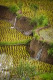 Balinese Rice Terrace Irrigation System. Royalty Free Stock Photo